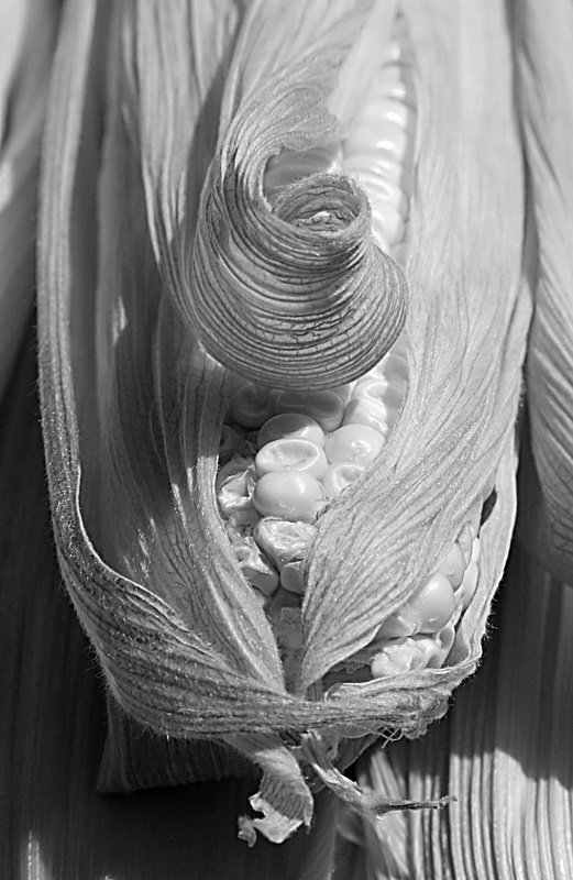 IMG_4275_adjustmentlayers_unsharpmask.jpg - Corn Closeup 1    Something about the curl of the husk made me try and shoot this ear of corn. Getting the DOF and black and white contrast right took a while, and I think the contrast could still use some work.